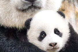 دانلود مستند Born In China 2016