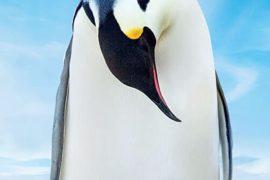 دانلود مستند BBC Snow Chick A Penguins Tale