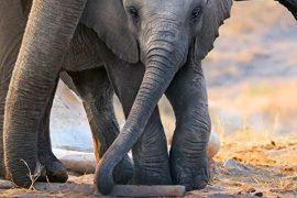 دانلود مستند Elephant 2020