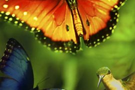 دانلودمستند Disneynature: Wings of Life 2011