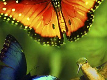 دانلودمستند Disneynature: Wings of Life 2011