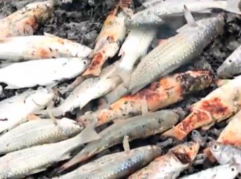 مستند خورگشت – غذاهای محلی جزیره قشم
