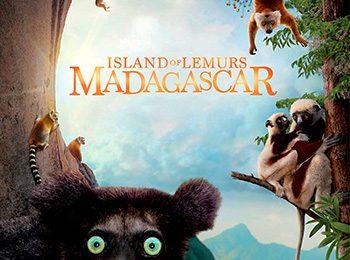 جزیره لیمورهاماداگاسکار –Island of Lemurs: Madagascar